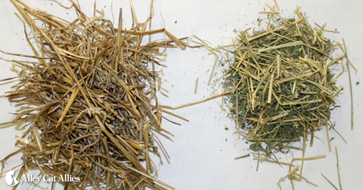 Hay For Dog Bedding