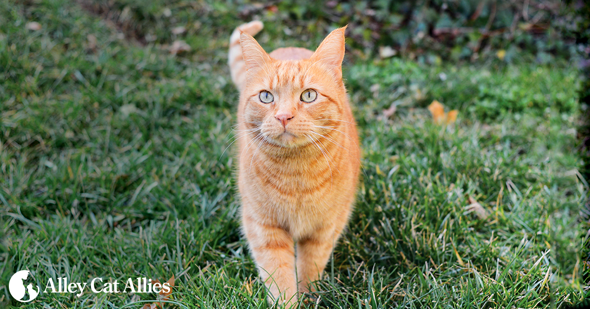 Financial Resources for Cats | Alley Cat Allies