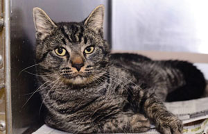 The Kanawha/Charleston Humane Association has implemented a new adoption system and also features adoptable animals like Harry on its Facebook page.