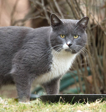 Feral Friends Network Picture of Feral Cat