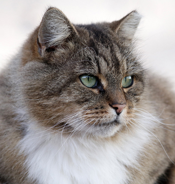 Planned Giving to Support Cat Rescue