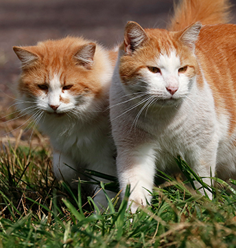 Monthly donations to support awareness of feline rescue