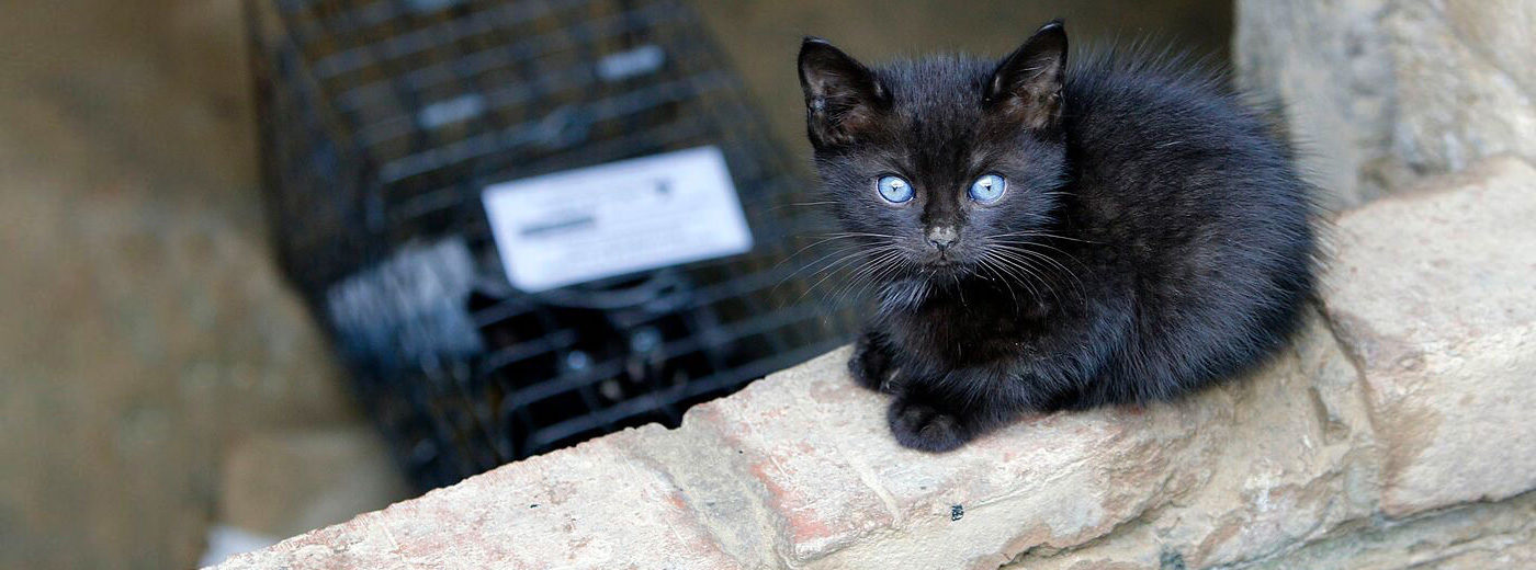 How to save & take care of a kitten and feral cats - an advocacy tool kit