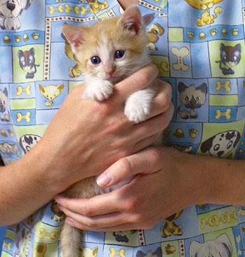 Veterinarian Caring for Kitten