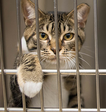 Animal Shelter showing Cat in Cage