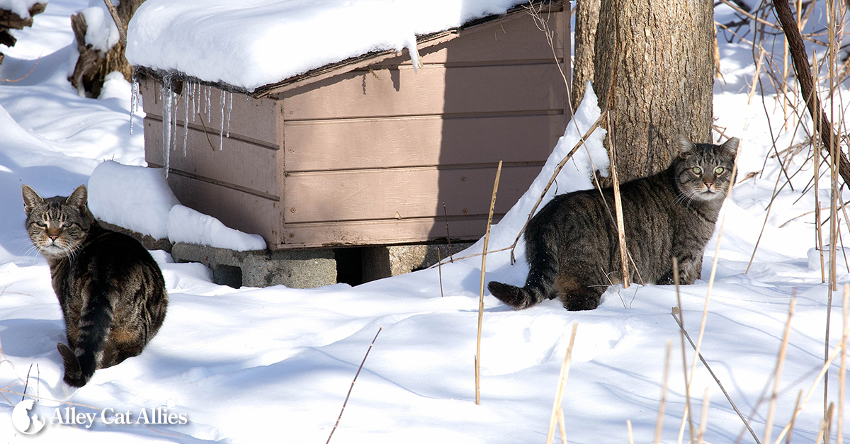 Outdoor Cats Winter Tips Outdoor Shelter To Take Care Of A Cat Outside