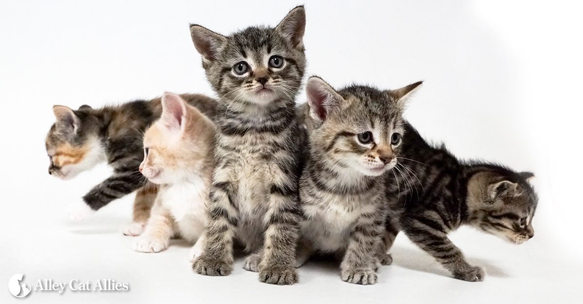 Alley Cat Allies How Old Is That Kitten Kitten Progression At A