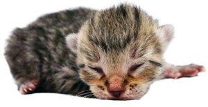 KittenProgression-Darling-newborn