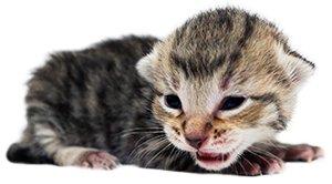 KittenProgression-Darling-week1