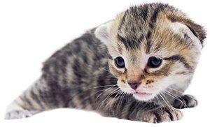 KittenProgression-Darling-week2