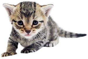 KittenProgression-Darling-week3