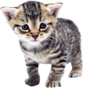 KittenProgression-Darling-week4