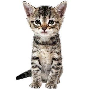 KittenProgression-Darling-week5