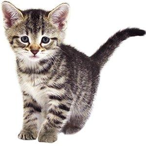 KittenProgression-Darling-week6
