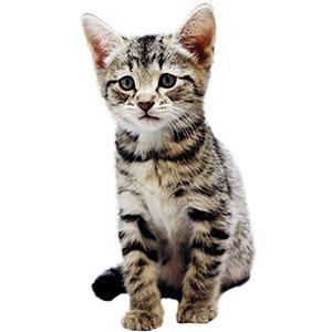 KittenProgression-Darling-week7