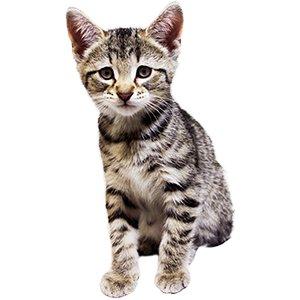 KittenProgression-Darling-week8
