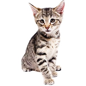 KittenProgression-Darling-week9
