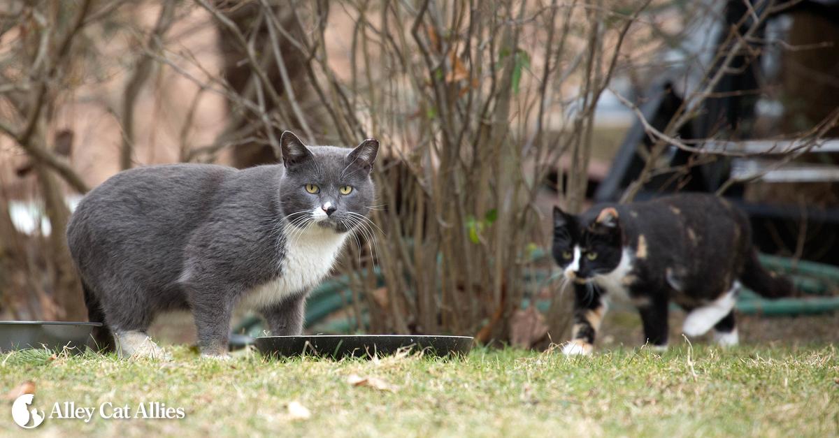 www.alleycat.org