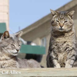 Community cats Otis and Molly from the Boardwalk Cats Project in Atlantic City, New Jersey