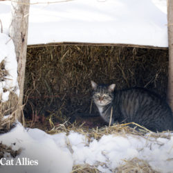 Winter tips: Community cat in straw shelter