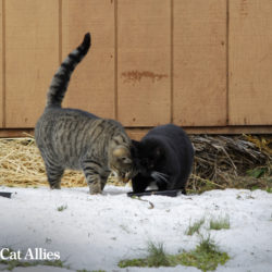 Winter tips: Community cats in snow