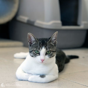A cat sits in front of her litterbox