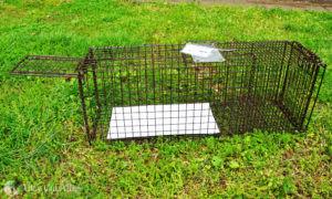 A set Tru-Catch humane box trap