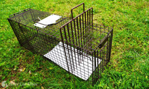 An isolator looks like a large pick or comb and is placed through the trap wires to keep a cat in a particular part of the trap