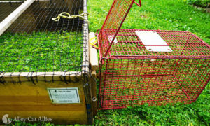A transfer cage lined up to a drop trap's transfer door